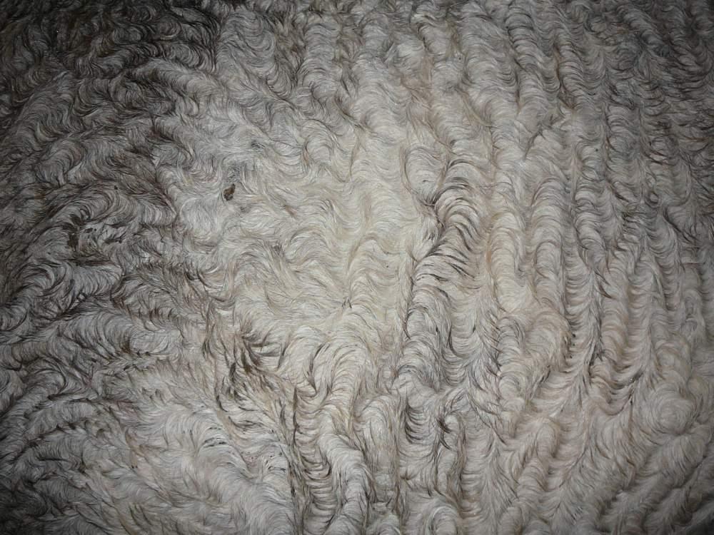 Купить Шерсть овечья