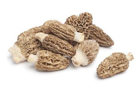 Купить Продаю грибы сморчок с Кыргызстана (сезон 2014)