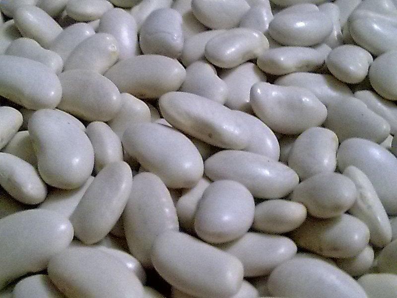 Купить Фасоль белая