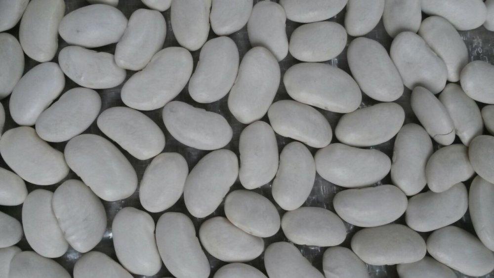 Купить Фасоль белая Кыргызстан Киргизия на экспорт (White beans)