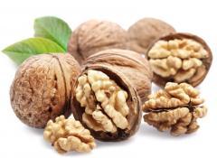 Oil of the walnut