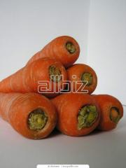 Семена моркови Колтан F1