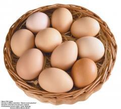 Куринное яйца, а также мяса птицы!