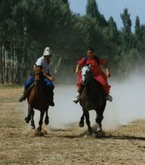 Организация конного туризма
